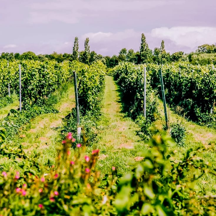 Vineyard Experience With Lunch For Two