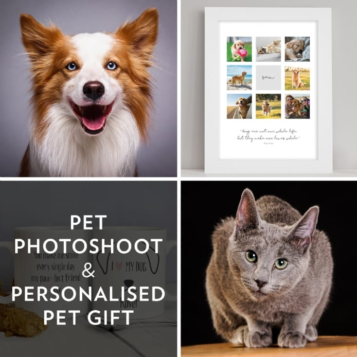 The Perfect Gift for Pet Lovers