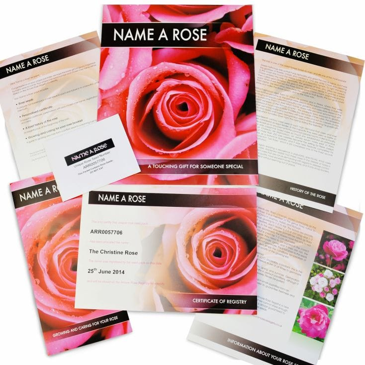name a rose bush