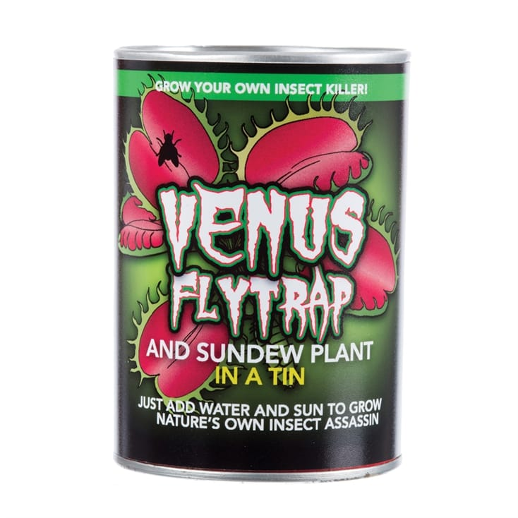 Venus Fly Trap in a Tin