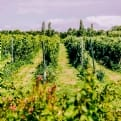 Thumbnail 10 - Vineyard Experience With Lunch For Two